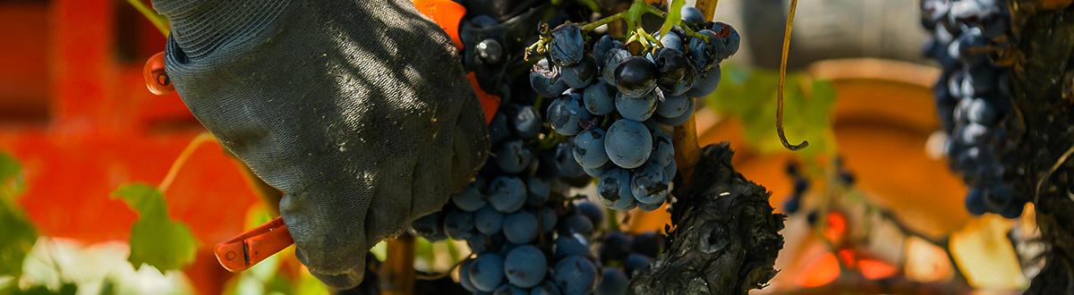 lahoz article equipement viticulture image 01 - L'équipement idéal pour les professionnels de la viticulture