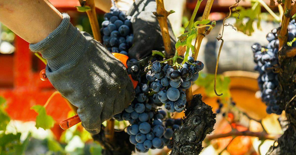 lahoz article equipement viticulture image a la une 1200x630 - L'équipement idéal pour les professionnels de la viticulture