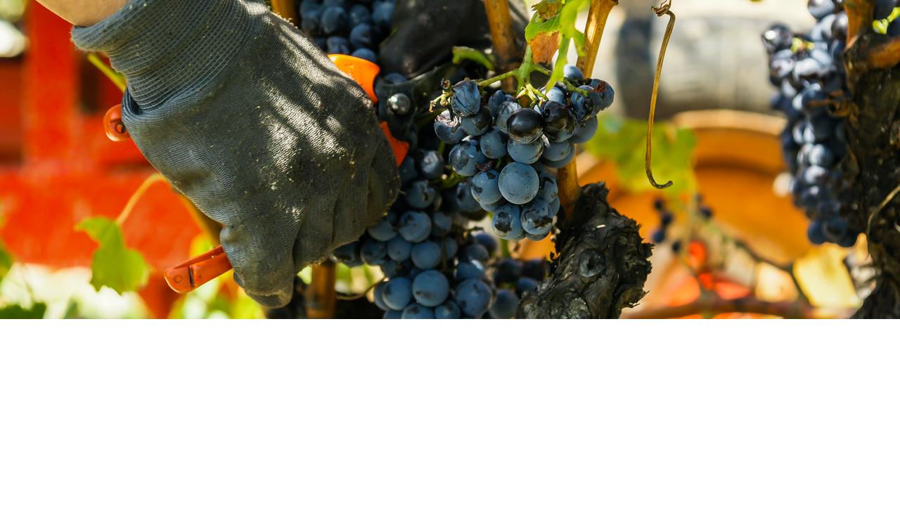 lahoz bandeau accueil viticulture defilement 3 - Bienvenue Atelier Lahoz Brod N Press vêtements professionnels linge epi équipement de protection individuelle retouches broderie flocage marquage